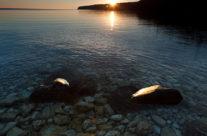 Tobermory Sunrise 3